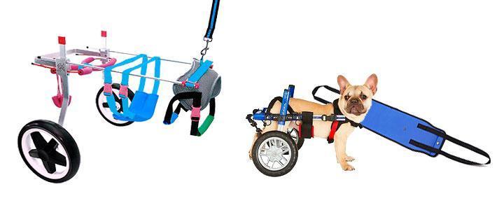 Carros para perros inválidos y discapacitados